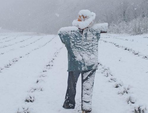 Sneeuw… hoe dan? Eind maart!