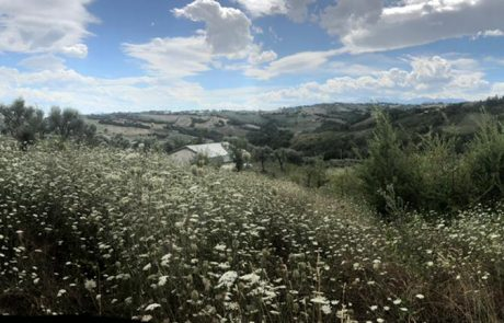 Kampeerplek, agriturismo-camping, Camping44, Loro Piceno, Le Marche, Italy