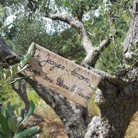 Adoptieboom, Camping44, agriturismo-camping, Loro Piceno, Le Marche
