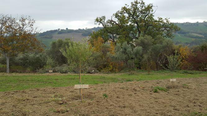 Adoptieolijfboom, Camping44, Loro Piceno, Le Marchel